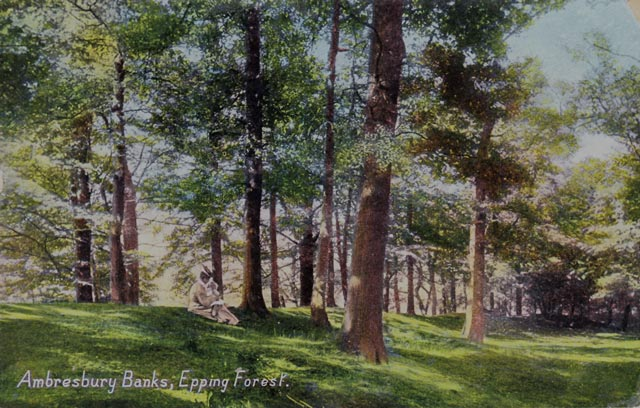 Ambresbury Banks, Epping Forest